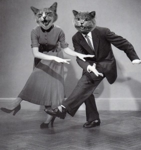 dancing cats, cat heads on humans, cats